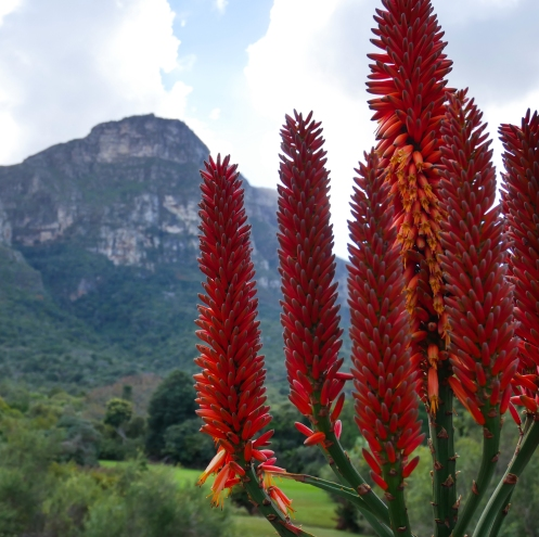 Flowers of Kirstenbosch